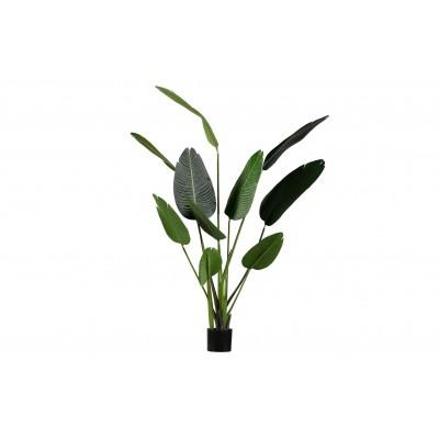 Žalia strelicija, dirbtinė, 164 cm