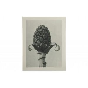 Paveikslas Plantstudie 60 (pilka / smėlio)