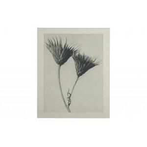Paveikslas Plantstudie 102 (pilka / smėlio)
