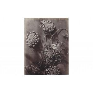 Paveikslas Plantstudie 21 (pilka / smėlio)