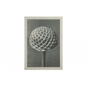 Paveikslas Plantstudie 77 (pilka / smėlio)