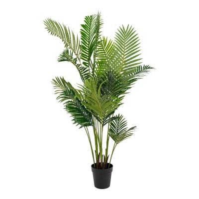 Palmė Areca