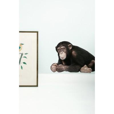 Sieninis lipdukas, safari draugai, šimpanzė