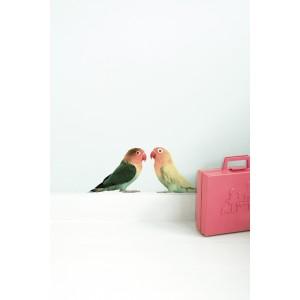 Safari draugai, Lovebirds (2 sieninių lipdukų rinkinys)