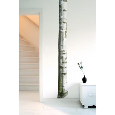 Sieninis lipdukas namų medis 7
