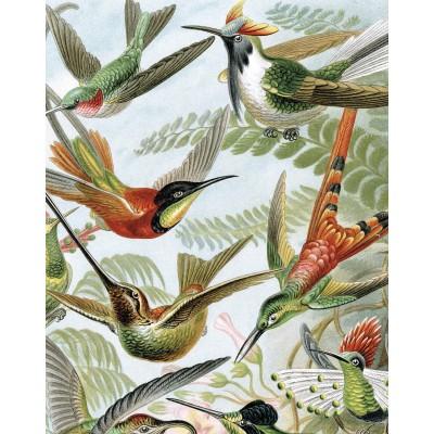 Tapetų pano, egzotiniai paukščiai