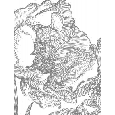 Fototapetas, graviūrinės gėlės, 6 lakštai