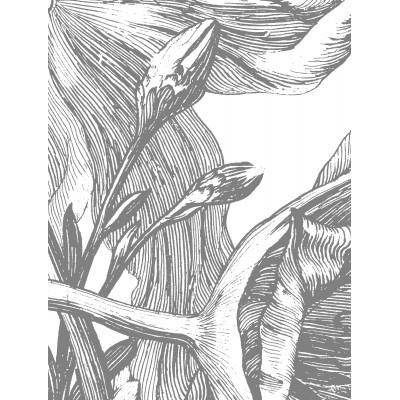 Fototapetas, graviūrinės gėlės, 8 lakštai